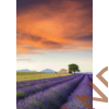 Kép 2/2 - Provance_levendula_500_db